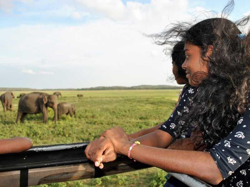 Sachini ist begeistert von den Elefanten.
