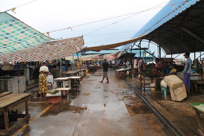 Negombos Fischer fischen frische Fische