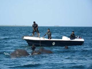 Die Küstenwache rettet zwei Elefanten aus dem Meer