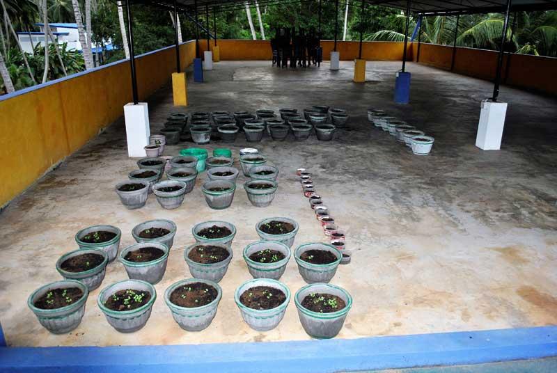 24 Passionsfrucht-Pflanzen wurden gesetzt und auch gleich ein Bewässerung-System :-)