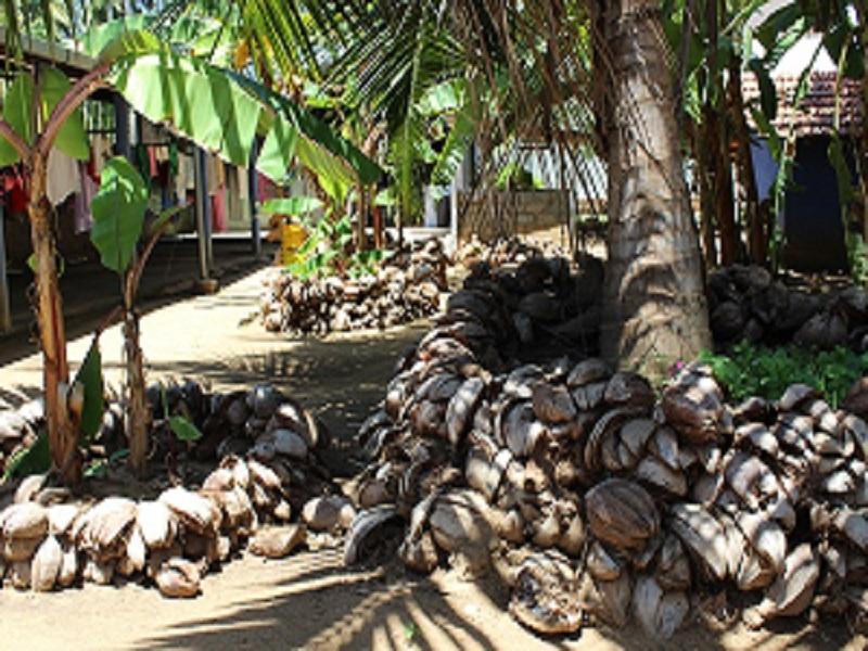 Kokosnussschalen sinnvoll verwendet