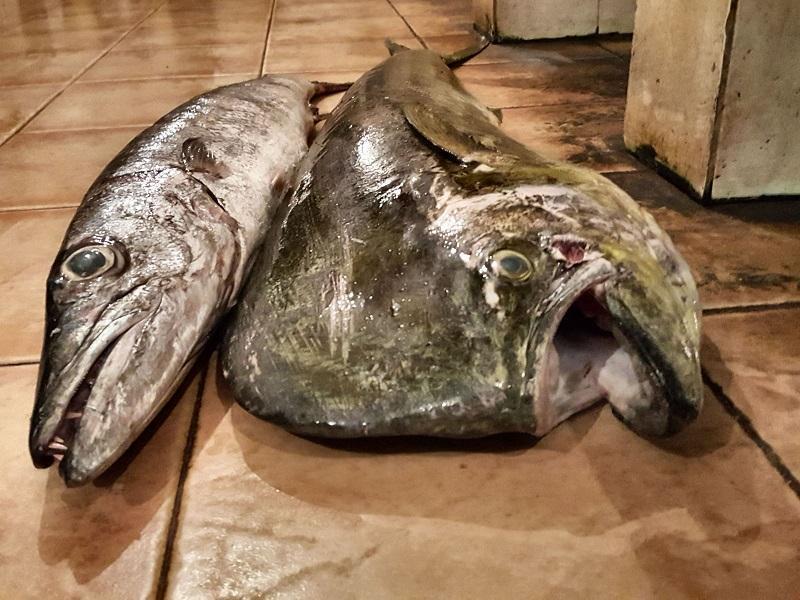 Fisch liegen auf dem Fischmarkt oft einfach auf dem Boden
