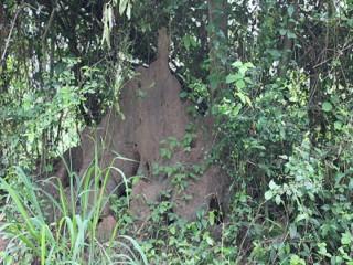 Einer der vielen Termitenhügeln in unserer Straße