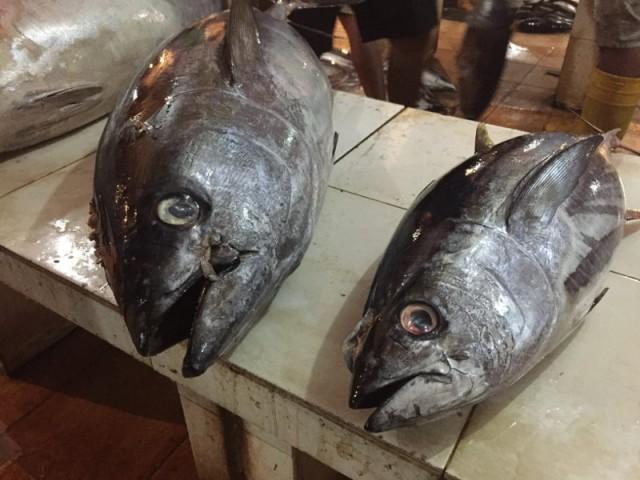 große Fischaugen