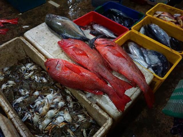 verschiedenste Fischarten
