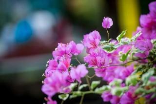 Blumen im Angels Home