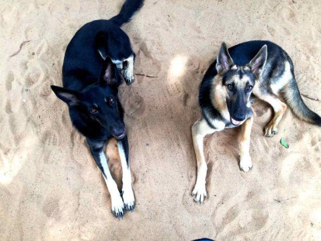 Luna und Lady, die Sicherheitschefs