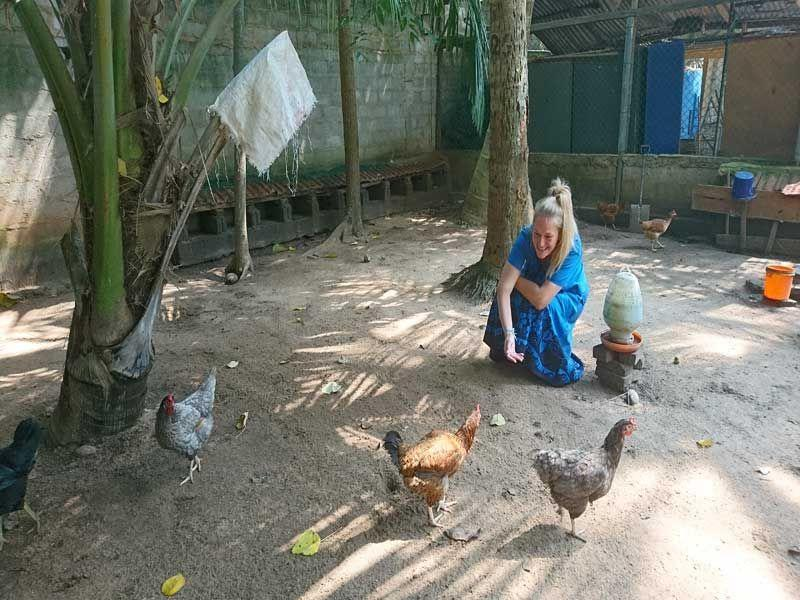 Besuch bei den Hühnern