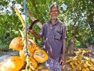 King Coconuts werden an jeder Straßenecke verkauft.