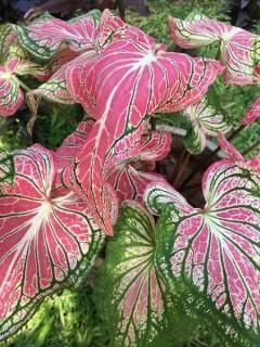Ausgefallene Muster auf den Blättern