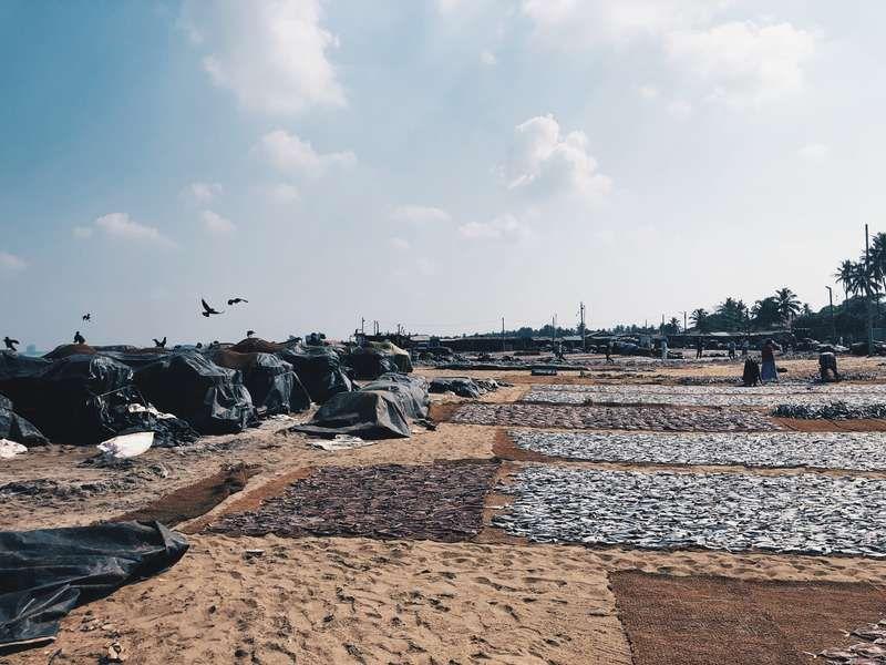 Fischmarkt in Negombo