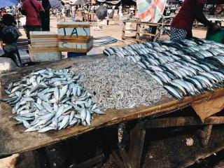 Die Fische werden auf Tischen ausgelegt